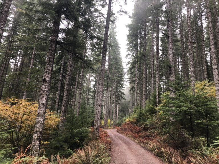 Still Falling for Oregon